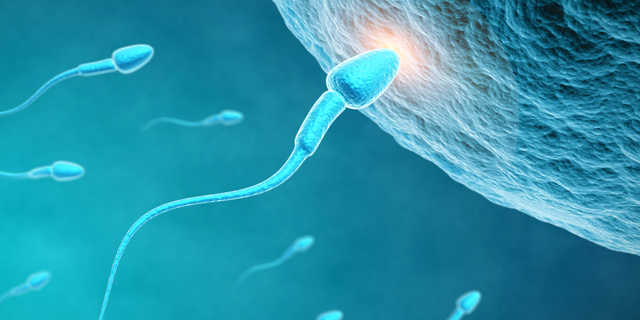 inseminaci u00f3n intrauterina